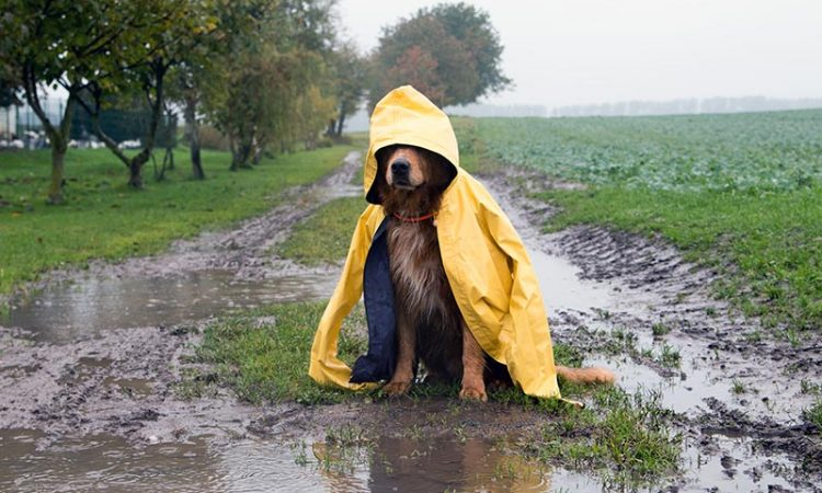 Hund_Host