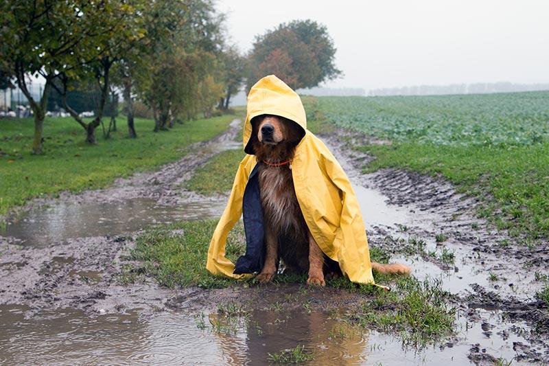 Hund_Höst