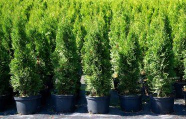 Friodlade växter eller krukodlade växter