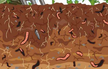 Den perfekta jordkvalitén för häckväxter