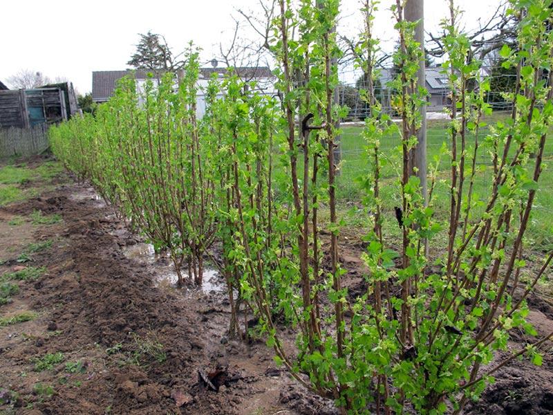 Mabarshack plantering